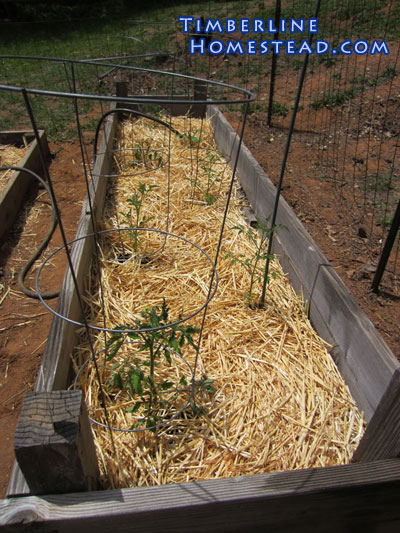 mulching-with-straw