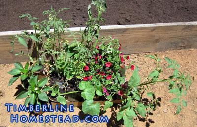 vegetable-starters