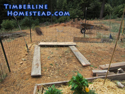 choosing-a-raised-garden-bed-location