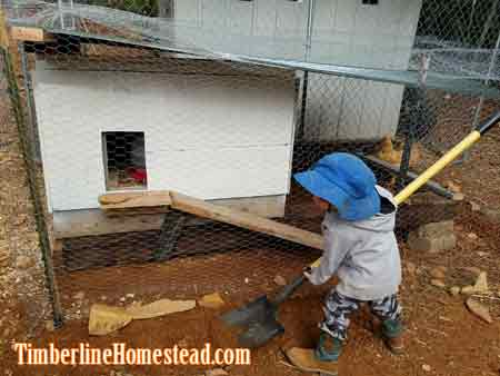 chicken-nursery-coop
